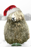 Longwool Sheep Wellington Boots Wearing Christmas Hat Photographic Print