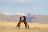 Namib Desert Horses Fighting Photographic Print