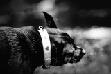 A Small Dog Photographic Print by Clive Nolan