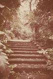 Steps in Garden Photographic Print by Steve Allsopp