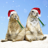 Black-Tailed Prairie Dog with Christmas Hats Photographic Print