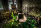 Fern Growing in Room Interior Photographic Print by Nathan Wright