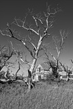 Dead Trees Photographic Print by Rip Smith