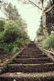 Steps in Garden Photographic Print by Steven Allsopp