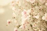 Pretty Pink Summer Flowers Photographic Print by Elizabeth Urqhurt