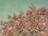 Purple Spring Flowers Photographic Print by Elizabeth Urqurt