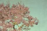 Pink Flowers on Tree Photographic Print by Elizabeth Urqurt