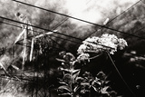Conceptual Image with Flowers Photographic Print by Clive Nolan