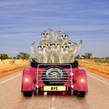 Meerkats in Car Waving Photographic Print