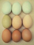 Bird Egg Still Life Photographic Print by Elizabeth Urqurt