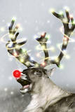 Reindeer with Snow, Red Nose and Lights on Antlers Photographic Print