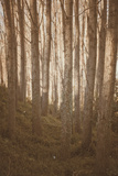 Woods in Sunlight Photographic Print by Steve Allsopp