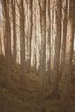 Woods in Sunlight Photographic Print by Steve Allsopp