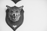 Stuffed Fox Head Photographic Print by Clive Nolan