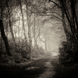 Woodland with Path Photographic Print by Craig Roberts