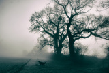 A Black Dog in a Field Photographic Print by Tim Kahane