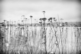 Wild Flowers Photographic Print by Sharon Wish