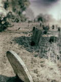 Old Gravestones in Overgrown Graveyard Photographic Print by Tim Kahane