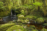 Cascade in Rainforest Small Waterfall and Brook Photographic Print