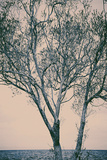 Bare Tree Against Sea Photographic Print by Steve Allsopp