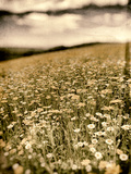 Wild Flowers in Field Photographic Print by Tim Kahane