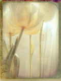 Yellow Flowers Photographic Print by Mia Friedrich