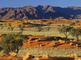 Namib Rand View over Red Dunes and Savanna Fotodruck