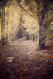 Woodland Path Photographic Print by Steve Allsopp