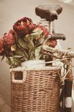 Red Flowers Photographic Print by Steve Allsopp
