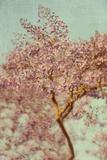 Pink Flowering Tree Photographic Print by Elizabeth Urqurt