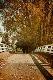 Bridge under Trees in Autumn Photographic Print by Steve Allsopp