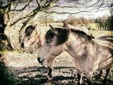 Three Horses Photographic Print by Tim Kahane