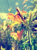 Garden Flowers Photographic Print by Tim Kahane