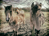 Horses in a Field Photographic Print by Tim Kahane