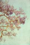 Spring Tree Photographic Print by Elizabeth Urqurt