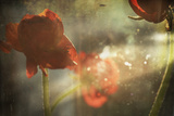 Red Flower Photographic Print by Mia Friedrich