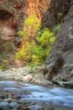 Autumn River Scene at Zion National Park Photographic Print by Vincent James