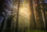 Light and the Land of the Trees, Northern California Photographic Print by Vincent James