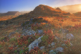 Morning Light and Mist at Sea Ranch, California Coast Photographic Print by Vincent James