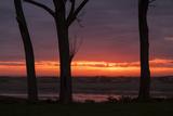 Sunrise Tree Design at Ogunquit, Maine Coast Photographic Print by Vincent James