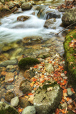 Fall Stream Detail, New Hampshire Photographic Print by Vincent James
