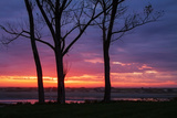 Tree Silhouettes at Sunrise, Maine Coast Photographic Print by Vincent James