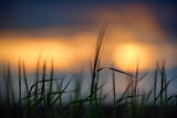 Palouse Sundown Photographic Print by Ursula Abresch