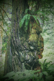 Tree Chief, California Redwood Coast Photographic Print by Vincent James