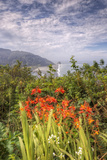Summer Wildflower Coast at Klamath, California Photographic Print by Vincent James
