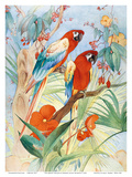 The Quaint Macaw, Red and Blue Macaws (Ara Macao) , From the Painting entitled Aristocrats Prints by Edward Detmold