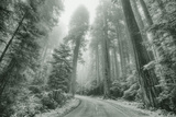 Misty Coastal Trail Road Scene, California Photographic Print by Vincent James