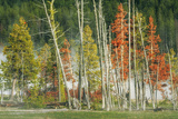 Firehole Lakeside Trees, Yellowstone Photographic Print by Vincent James