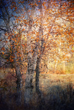 Kootenay Fall 2 Photographic Print by Ursula Abresch