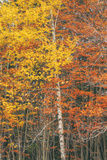 Retro Style Fall Color Design, New England Photographic Print by Vincent James